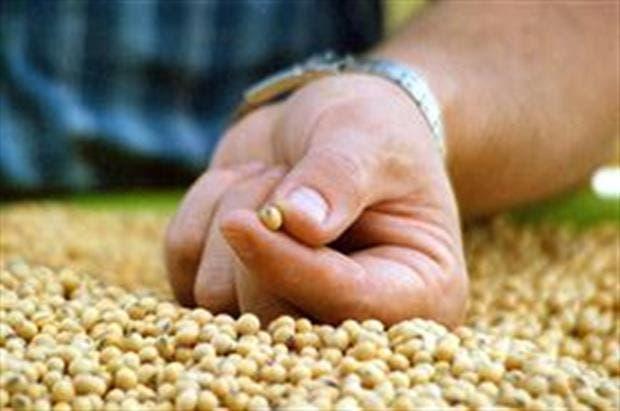 La soja es el cultivo que más aportó por retenciones; hoy tiene una alícuota del 30%.