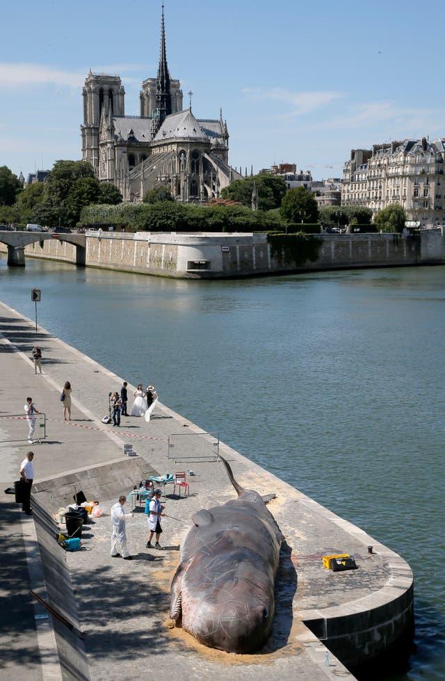 ballena en París
