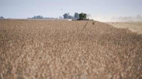 El cultivo tiene una alícuota del 30%