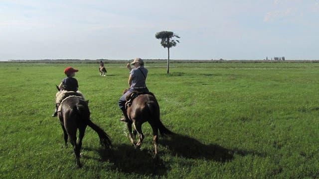 San Antonio, Corrientes.- En sus 3918 hectáreas, esta reserva contiene humedales y montes típicos