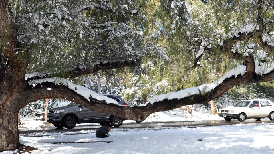 La ciudad de Mendoza bajo nieve. Foto: Télam