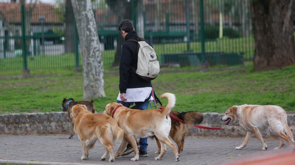 Según la norma, cualquier persona que salga a la calle con más de tres canes, sean mascotas propias o ajenas, debe estar anotada en ese padrón y llevar consigo la credencial que lo habilita. Foto: LA NACION / Maxie Amena
