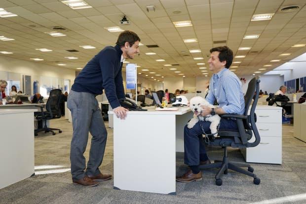 Toto, en una jornada de trabajo de su dueño Mariano Casco, en las oficinas de Mars
