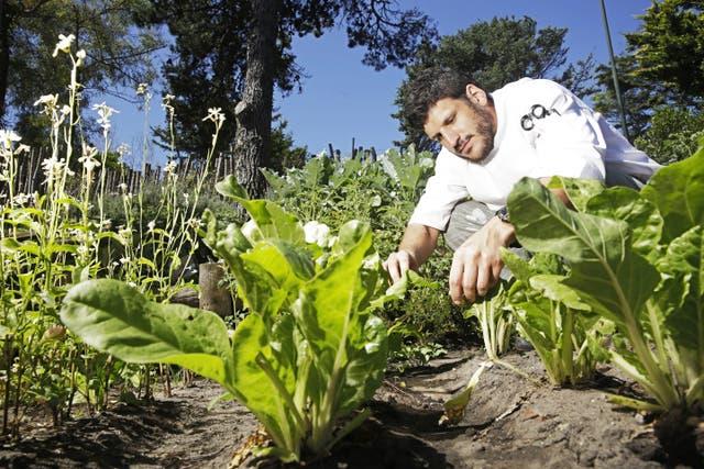 Manuel Grinberg, chef de La Vieja Hostería, en su huerta en Pinamar
