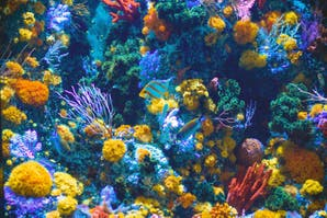 El cambio climático está aniquilando a las barreras de coral