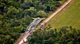 El desmonte de zonas forestadas en Salta para sembrar soja causa serias consecuencias