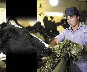 """Todos los días, Leo García supervisa el funcionamiento del tambo-cabaña y observa el estado de las 65 vacas """"elite"""" Holando Argentino"""