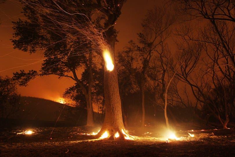 Un árbol hueco por el incendio lanza chispas a su alrededor. Foto: AFP