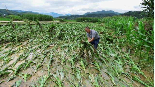Las inundaciones arrasaron con los campos sembrados en el condado de Jianhe, provincia de Guizhou