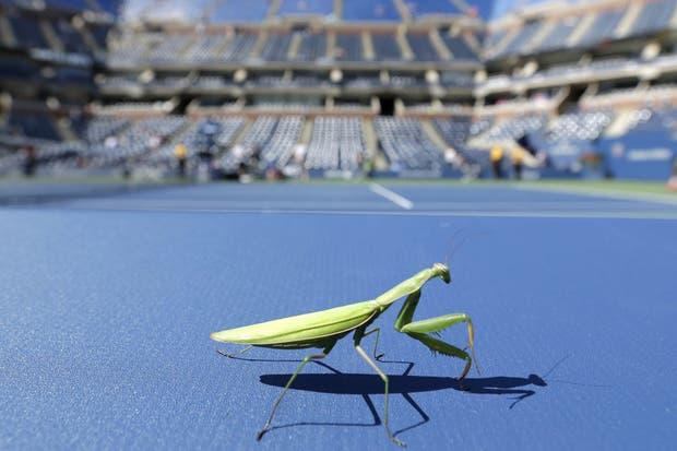 Ni los insectos que quisieron perder la final entre Nole y Rafa.  Foto:AP