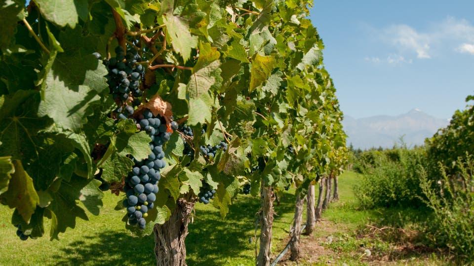 El sueño del vino propio: la decisión de invertir por placer