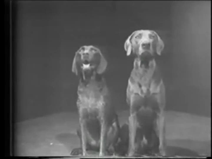 Dog Duet, William, Wegman, video, 1975-76