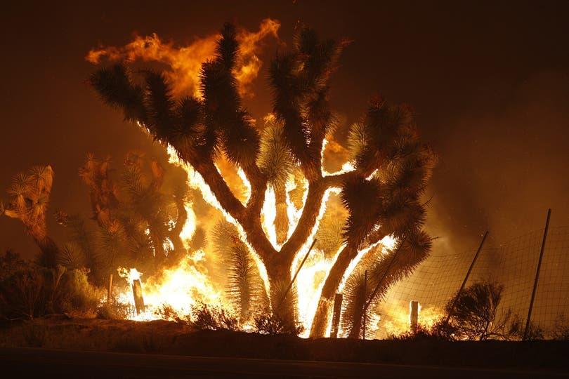 Miles de diferentes especies de plantas desaparecieron por completo del paisaje californiano. Foto: AFP