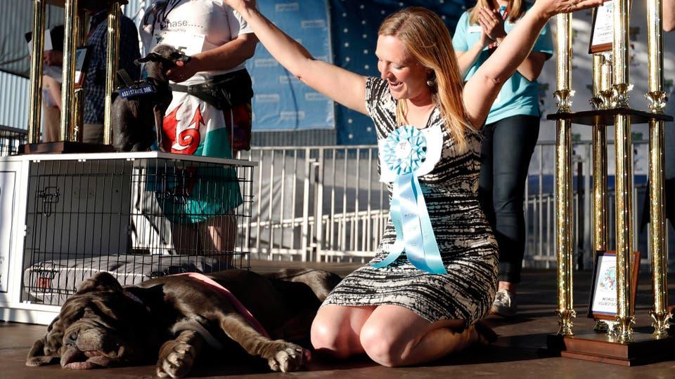 Martha tiene tres años y pertenece a una patrulla de perros de rescate que recibió como premio 1.500 dólares (1.340 euros) y un trofeo de 1,60 metros.. Foto: EFE / MONICA M. DAVEY