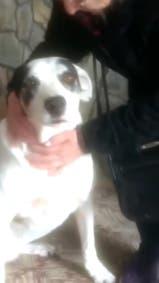 Una abuela se reencontró con su perra tras las inundaciones