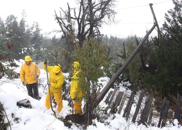 Operarios trabajan en la reparación de un poste eléctrico