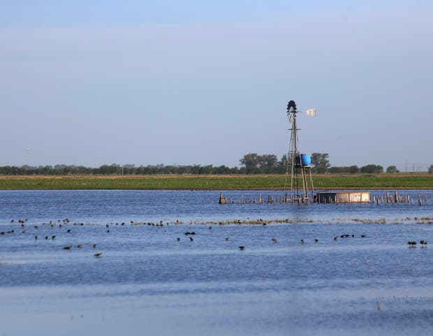 Los excesos hídricos afectan los nutrientes en el suelo