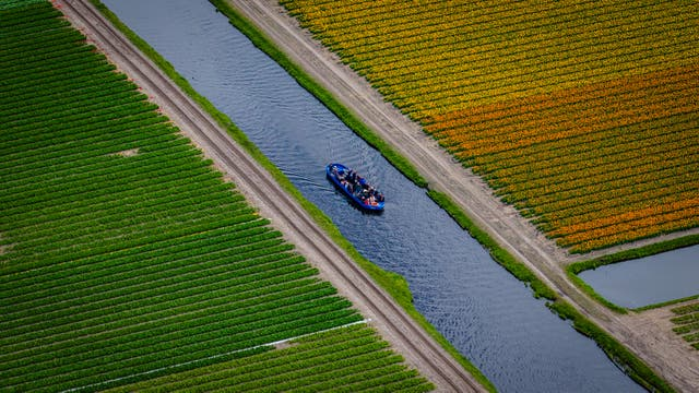 Turistas paseando en bote por los campos de tulipanes