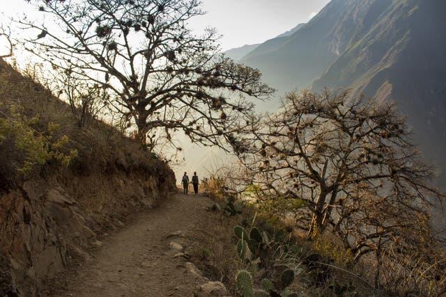 Por el sendero en un bosque de alisos. Atardecer del primer día de trekking. Foto: Luis Agote