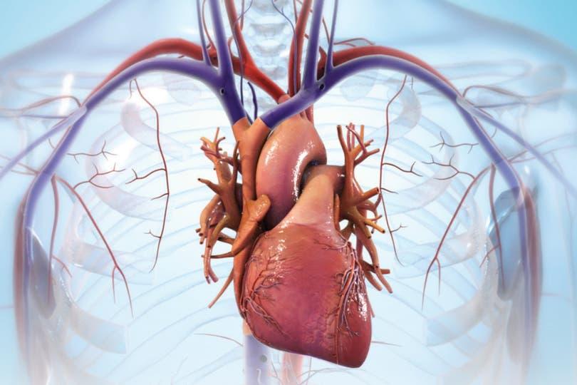 Una compañía promete tener la técnica para usar impresoras 3D para crear corazones de reemplazo, hechos con tejido del paciente; cuáles son los desafíos que enfrenta