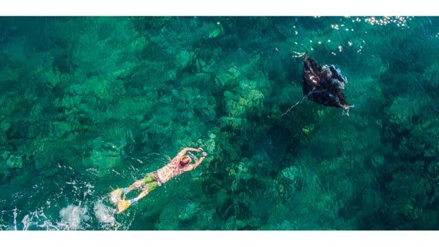 Un buzo sigue una manta raya, Isla Yasawa, Fiji