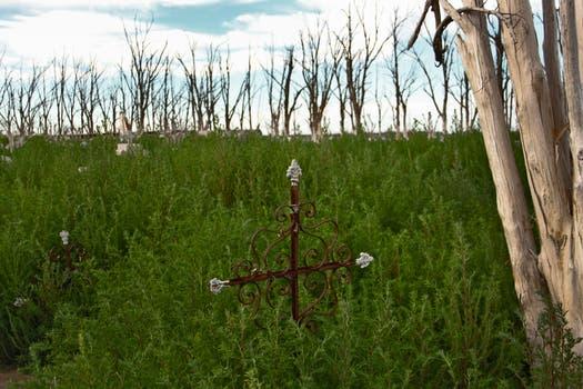 Entre los matorrales y los árboles secos aún quedan cruces en pie; algunas tumbas fueron trasladadas al nuevo cementerio. Foto: LA NACION / Mauricio Giambartolomei