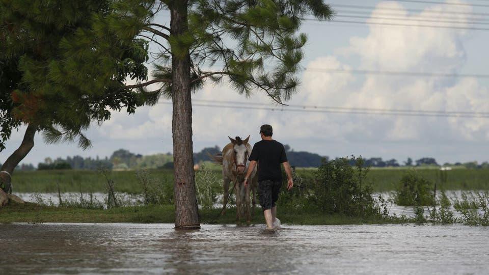 Los propietarios tratan de llevar a los animales a las zonas más altas. Foto: LA NACION / Emiliano Lasalvia / Enviado especial