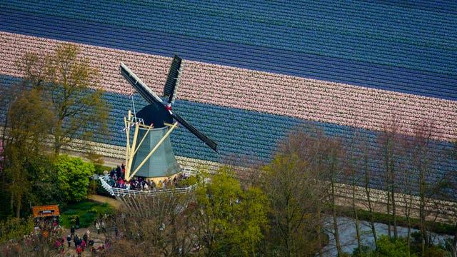 Personas mirando los campos desde un molino de viento
