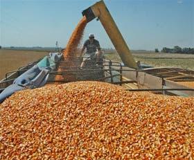 El cereal siente el impacto de una gran siembra en EE.UU.