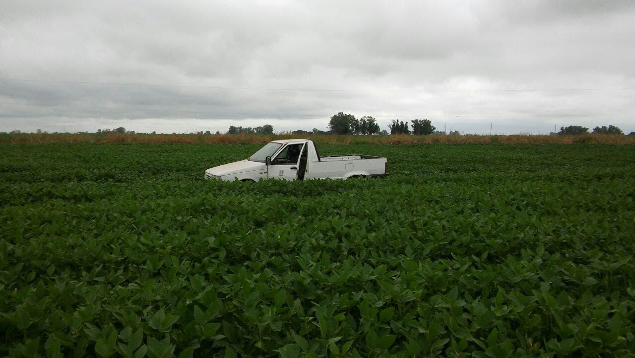 Un lote de soja en la zona de Marcos Juárez Gentileza Juan Pablo Ioele