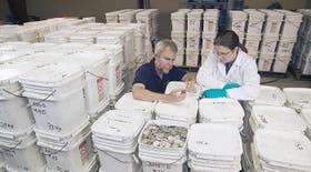 Los expertos revisaron las monedas halladas