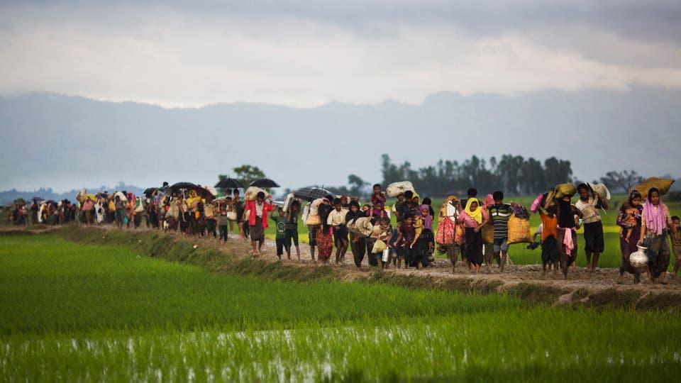 Miembros de la minoría étnica Rohingya de Myanmar caminan a través de campos de arroz después de cruzar la frontera en Bangladesh