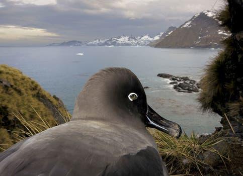 El primer premio en la categoría Historias de la naturaleza, del fotógrafo canadiense Paul Nicklen. Foto: AP