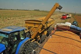 Caída para el precio del maíz