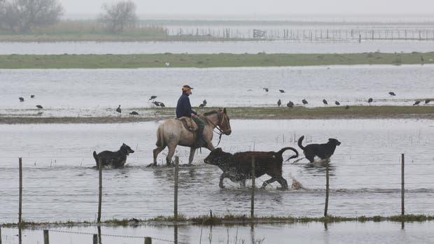 En ganadería las pérdidas serán por mortandad, ventas forzadas y pérdidas de pasturas