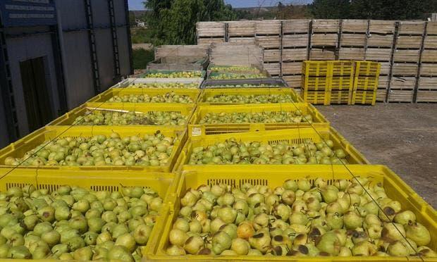 La pera, el producto con mayor brecha: 8,5 veces