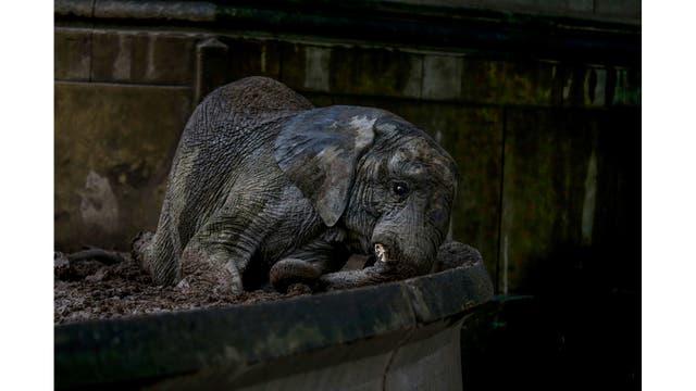 Elefante africano pequeño en el barro