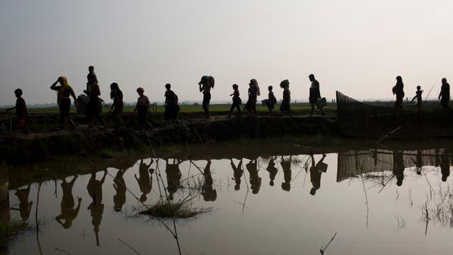 Miembros de la minoría étnica Rohingya de Myanmar caminan a través de campos de arroz después de cruzar la frontera hacia Bangladesh