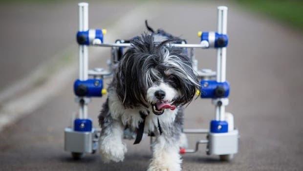 Puffy sufrió un accidente y volvió a caminar gracias a la ayuda de cientos de personas que se solidarizaron con su causa