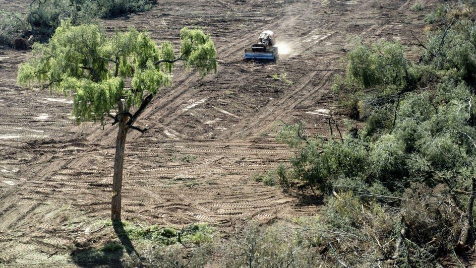 Pérdida de biodiversidad e inundaciones son los principales efectos del desmonte