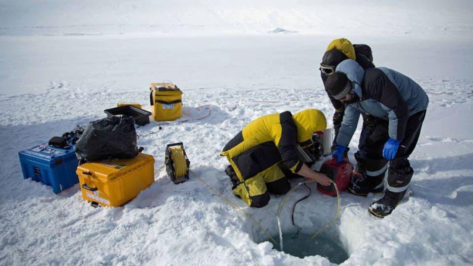 La división de científicos australianos en Antártida envían la cámara al mundo submarino Australian Antarctic Division