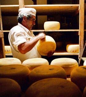 Los científicos piensan que se podría acelerar la elaboración de quesos