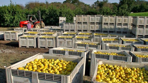 Se exportarán limones a México por primera vez en la historia
