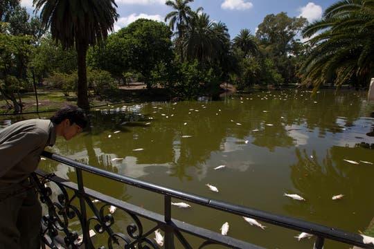 Así amanecieron los lagos de Palermo. Foto: LA NACION / Aníbal Greco