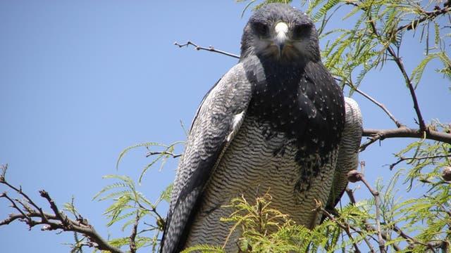 Decenas de aves surcan el aire, en dos días Aves Argentinas identificó 100