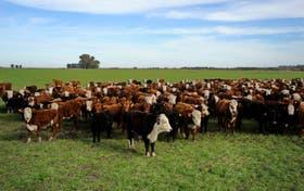 El país necesita producir animales con mayor kilaje