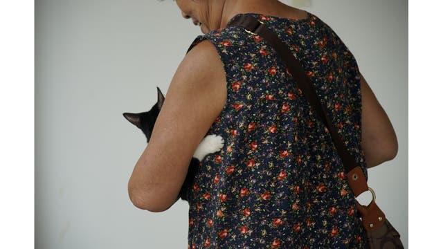 Un gato es transportado por su dueño después de recibir tratamiento en Shanghai TCM