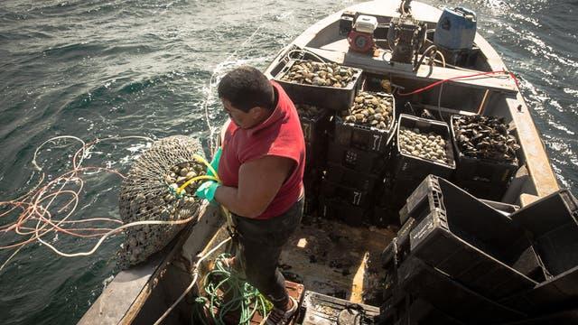 Lucas Del Río recoge los salabardos cargados y comienza a llenar los cajones; luego va separando la pesca de cada buzo