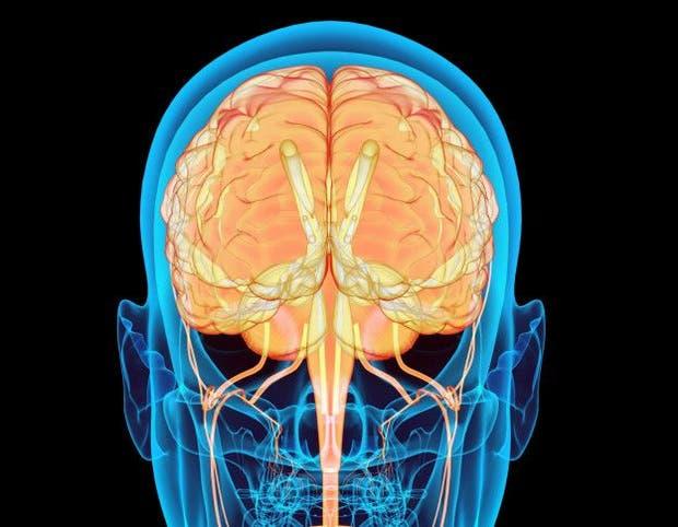 Cuando estamos deshidratados, nuestro cerebro envía una señal para lograr retener el agua en nuestro cuerpo por más tiempo