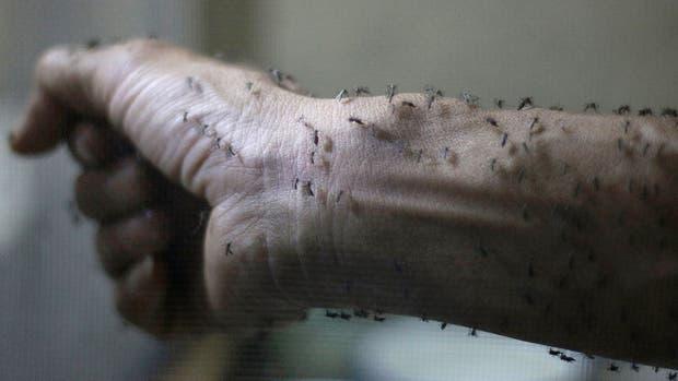 Detectan en Córdoba el primer caso de zika autóctono por transmisión sexual